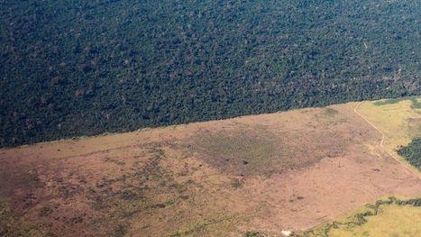 Une carte interactive de la déforestation dans le monde | ZignomaTics | Scoop.it