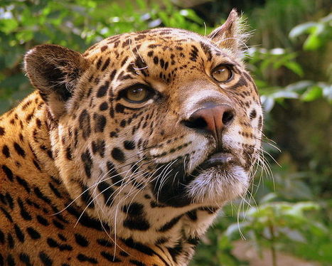 Costa Rica Becomes The First Nation To Ban Hunting ! | The Blog's Revue by OlivierSC | Scoop.it