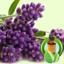 Essential Oils | Natures Garden Wholesale candle making supplies, soap making supplies Ohio, Fragrance oils | Essential-Oils | Scoop.it