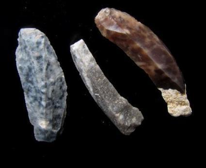 Samedi-sciences (170): comment Homo sapiens a précipité la chute de Néandertal | Aux origines | Scoop.it