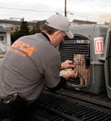 Bunny's Blog: ASPCA Rescues Animal Victims of Hurricane Sandy | Pet News | Scoop.it