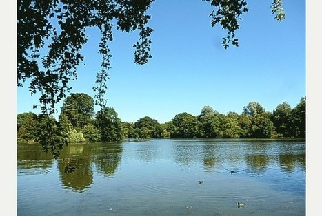 Algal bloom threatens Earlswood Lakes? - Surrey Mirror | cyanobacteria | Scoop.it