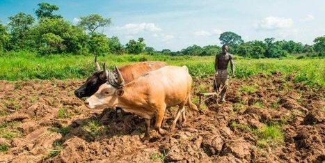 Après le passage d'Ebola, les campagnes de Guinée tentent de reprendre des couleurs - JeuneAfrique.com   Actualité économique et sociale en Afrique sub-saharienne   Scoop.it