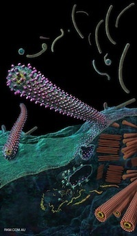 Aerosolized Ebola vaccine protects primates and elicits lung-resident T cell responses | Virology and Bioinformatics from Virology.ca | Scoop.it