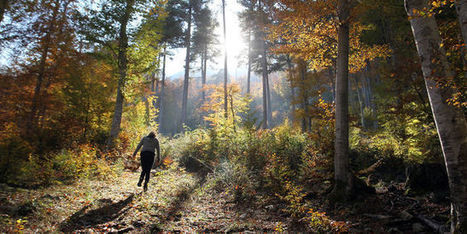L'Office national des forêts en pleine crise - Le Monde | Le Fil @gricole | Scoop.it