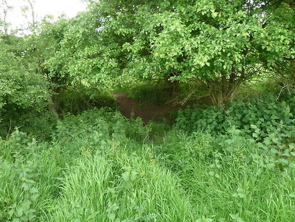 Walks And Walking - Epping Forest Horseshoe Hill Walking Route | Walks And Walking | Scoop.it