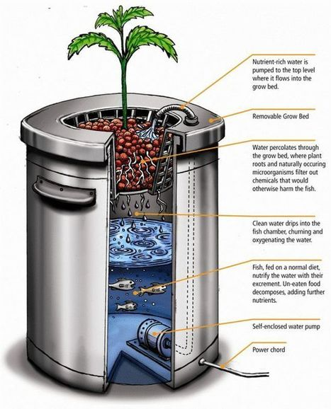 Pin by Adventures on Emergency Preparedness | Pinterest | Aquaponics & Permaculture | Scoop.it
