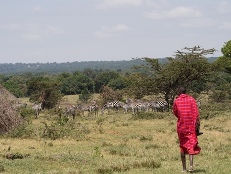 What can reverse the wildlife decline in the Masai Mara? - Conservation Jobs UK | Conservation | Scoop.it