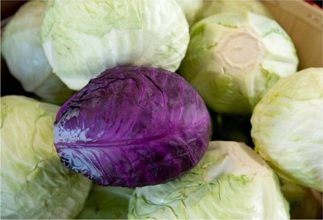 Tis the Season ... for Cabbage? | Fooducate | Dante's Scoop | Scoop.it