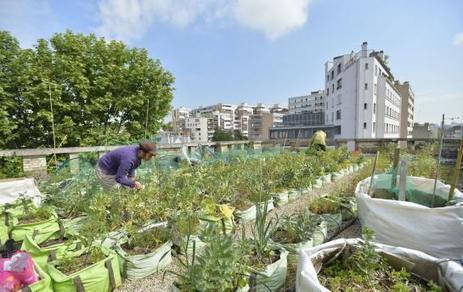 « Nous allons ouvrir une ferme urbaine de 2 500 m2 dans Paris » | Tout le web | Scoop.it
