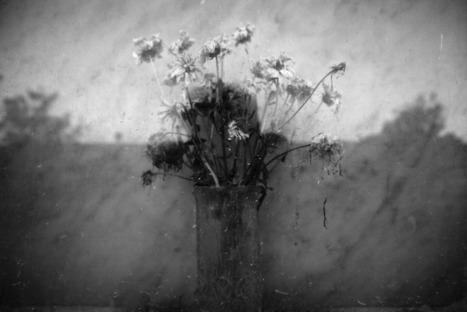 Anne-Sophie Costenoble  Le Silence de l'Oiseau | kesako71 | Scoop.it