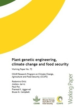 Plant genetic engineering, climate change and food security | CCAFS: CGIAR research program on Climate Change, Agriculture and Food Security | Agriculture and Farming | Scoop.it