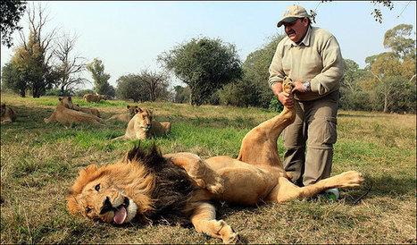 Alex, le masseur de lions ! :)   Voyager malin !   Scoop.it