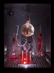 Weird Science: Biotechnology as Art Form | ARTnews | Crescat scientia; vita excolatur | Scoop.it