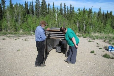 N.W.T. morel pickers poised for boreal bonanza - Globalnews.ca | NWT News | Scoop.it