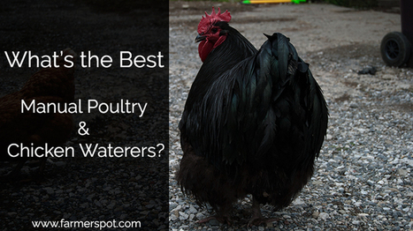 Poultry and Chicken Waterer Systems – What's the best? | Farming and the Countryside | Scoop.it