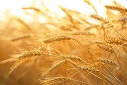 Après les pâtes, le pain et la farine vont-ils repartir à la hausse ? | LSA-Conso.fr | Actu Boulangerie Patisserie Restauration Traiteur | Scoop.it