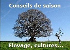 Les premiers colzas sont au stade cotylédons. | Conseil de saison Culture et Elevage - Agriculture | Scoop.it