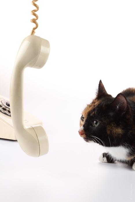 RESEAUX SOCIAUX : pas le bon moyen pour contacter les journalistes ? | Communication & digital | Scoop.it