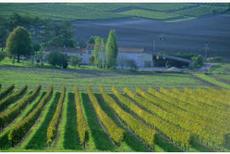Cognac: 500 hectares du vignoble quasiment détruits par un nouvel orage de grêle, Viticulture - Pleinchamp   Le Cognac et son vignoble   Scoop.it