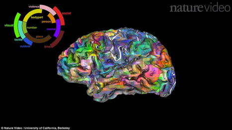 'Brain Atlas' Charts How We Navigate Language | STEM Connections | Scoop.it