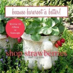 Free seeds for school gardens Friday!   Dirt Du Jour   Annie Haven   Haven Brand   Scoop.it