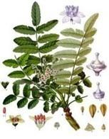 Six natural alternatives to ibuprofen   Natural Anti-Inflammatory Benefits   Scoop.it