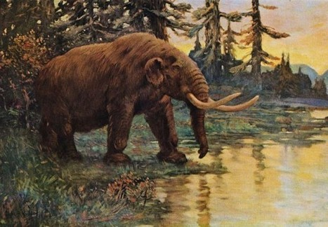 What Killed the Great Beasts of North America? | Earth and Enviormental Science | Scoop.it