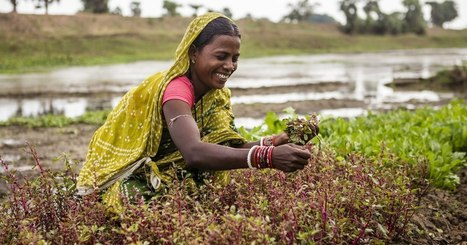 undp india - Women Adapting to Climate Change | Lorraine's Environmental Change &  Management | Scoop.it
