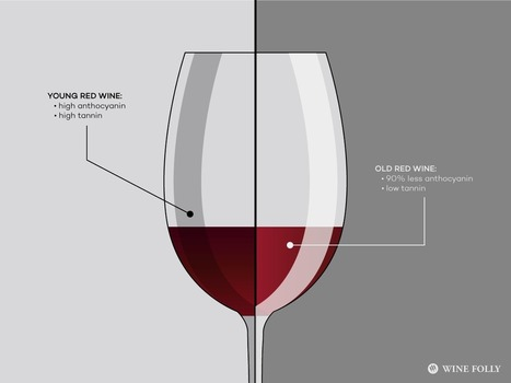 Young Wine May Be Better Than Old Wine | binNotes Italy - Wines & Culture | Scoop.it