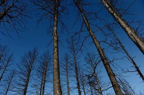 Colorado wildfires: Crews prepare for worst, expect average season - Brush News Tribune | Healthcare Events | Scoop.it