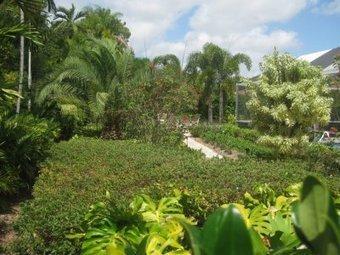 Pinecrest Landscape Services At Miami   Landscapings   Scoop.it