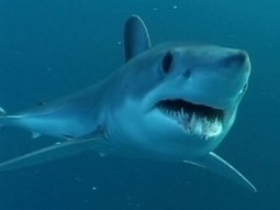 Human Antibodies Given Sharklike Armor to Fight Disease | Amazing Science | Scoop.it