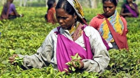 Commerce. L'agriculture au cœur de l'accord OMC à Bali | Scoop Indonesia | Scoop.it
