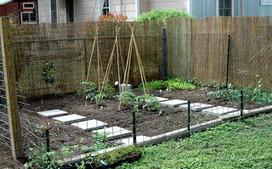 Organic Gardening: Organic Vegetable Garden Basics | Organic Gardening Blog | Scoop.it