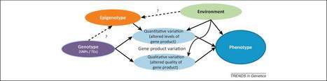 ScienceDirect.com - Trends in Genetics - Epigenetics and crop improvement | Epigenetics and Genomics | Scoop.it