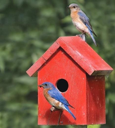 Tips for bird's house | Online Information | Scoop.it