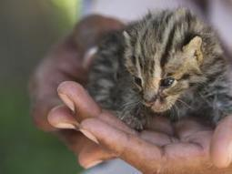 Cat owners in Cape Town warned of deadly virus | Virology News | Scoop.it