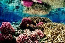 Cutting back deforestation will save coral reefs - Blue & Green Tomorrow | Environmental issues | Scoop.it