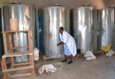 Kenyan farmers turn to new weapons again 'Osama' | MAIZE | Scoop.it
