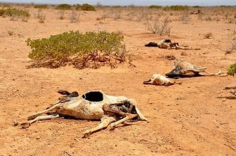 África debe buscar su propia resiliencia al cambio climático | Diario ... - Diario Digital Nuestro País | Agua | Scoop.it