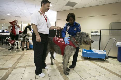 Airport therapy dogs take the stress out of travel - Fox News | holistic stress management | Scoop.it