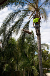 Professional tree contractor in Beavercreek OH | Beavercreek Tree Care LLC | Beavercreek Tree Care LLC | Scoop.it