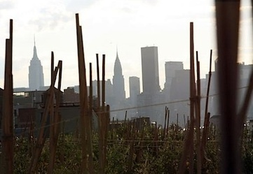 Farm to fork in New York: The growing movement of urban farming (BBC Video)   Ethnobotany: plants and people   Scoop.it