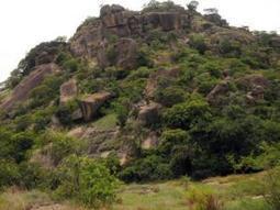 Nigeria, a birdwatcher's paradise - Independent Online   Opinions on Nigeria   Scoop.it