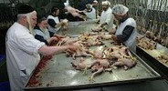 Kosher Chicken Shortage Hits London   Food and Nutrition   Scoop.it