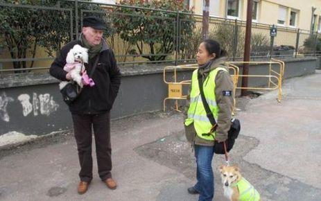 Versailles veut éduquer  les propriétaires de chiens | CaniCatNews-actualité | Scoop.it