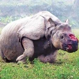 Intervienen en Cuenca piezas de marfil de animales en peligro de extinción | Animales en peligro de Extinción | Scoop.it