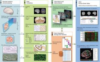 La mappa genetica del nel nostro cervello | Med News | Scoop.it