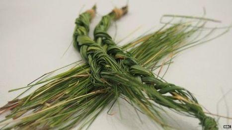 Une herbe traditionnelle pour repousser les moustiques   EntomoNews   Scoop.it